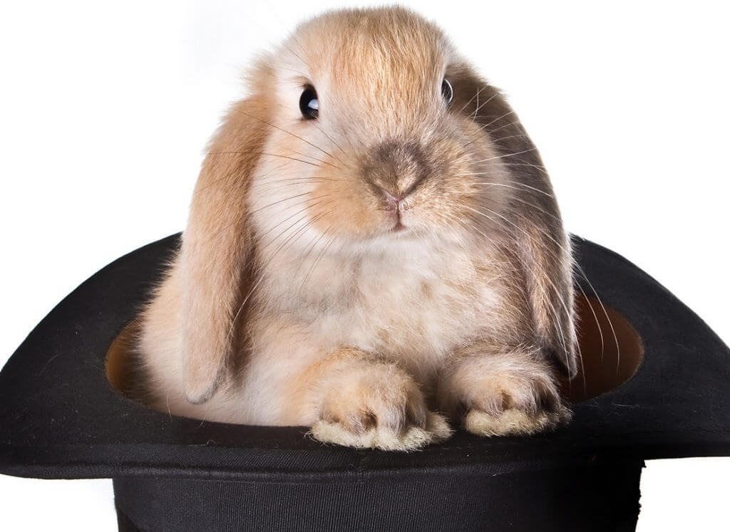 Kaniner og tryllekunstnere