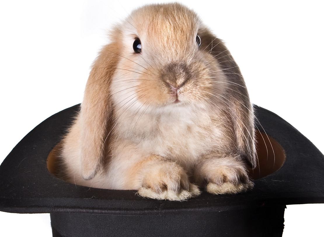 kanin-i-hatt